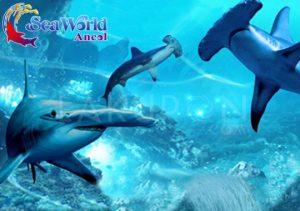 Harga Tiket Masuk Seaworld Terbaru