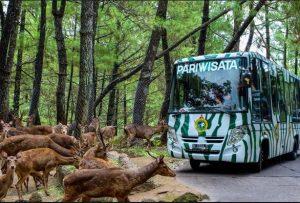 Harga Tiket Taman Safari Prigen terbaru