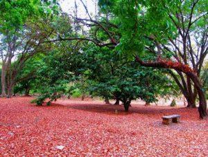 View kebun raya purwodadi