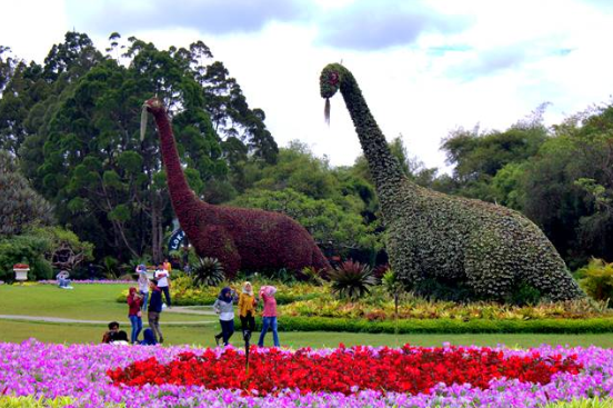 Spot Foto Harga Tiket Masuk Taman Bunga Nusantara S D Juni